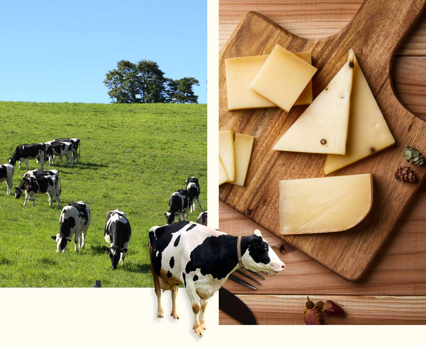 美味しいナチュラルチーズ